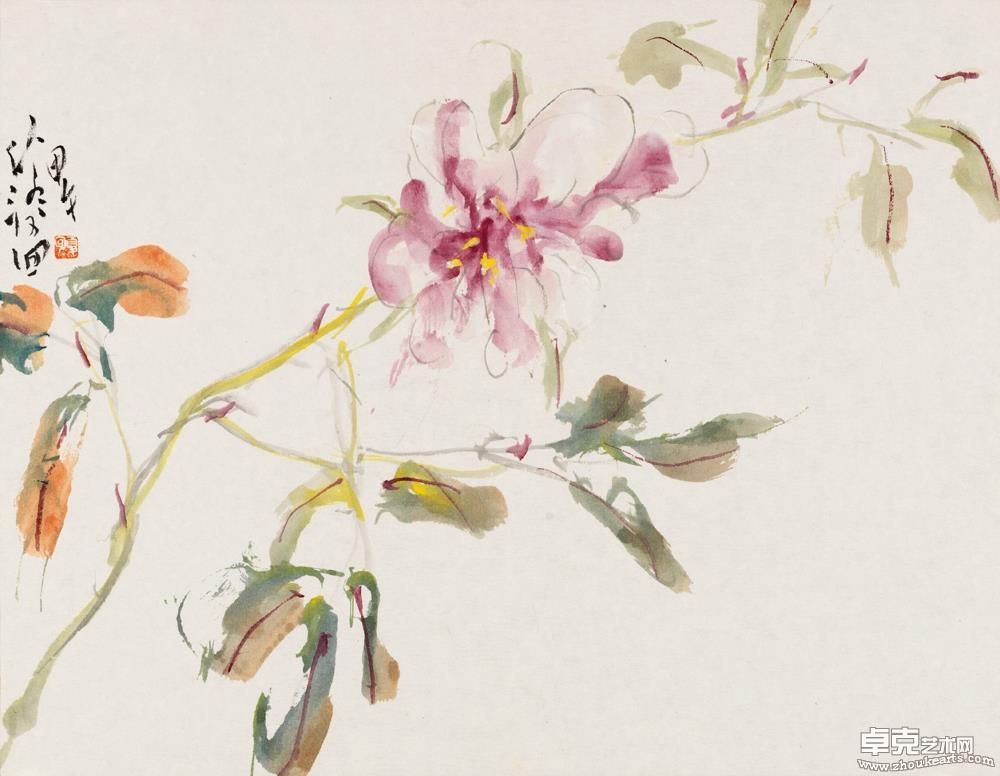 花卉图册-1